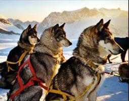 Husky-Tour als besonderes Geschenk zu Weihnachten